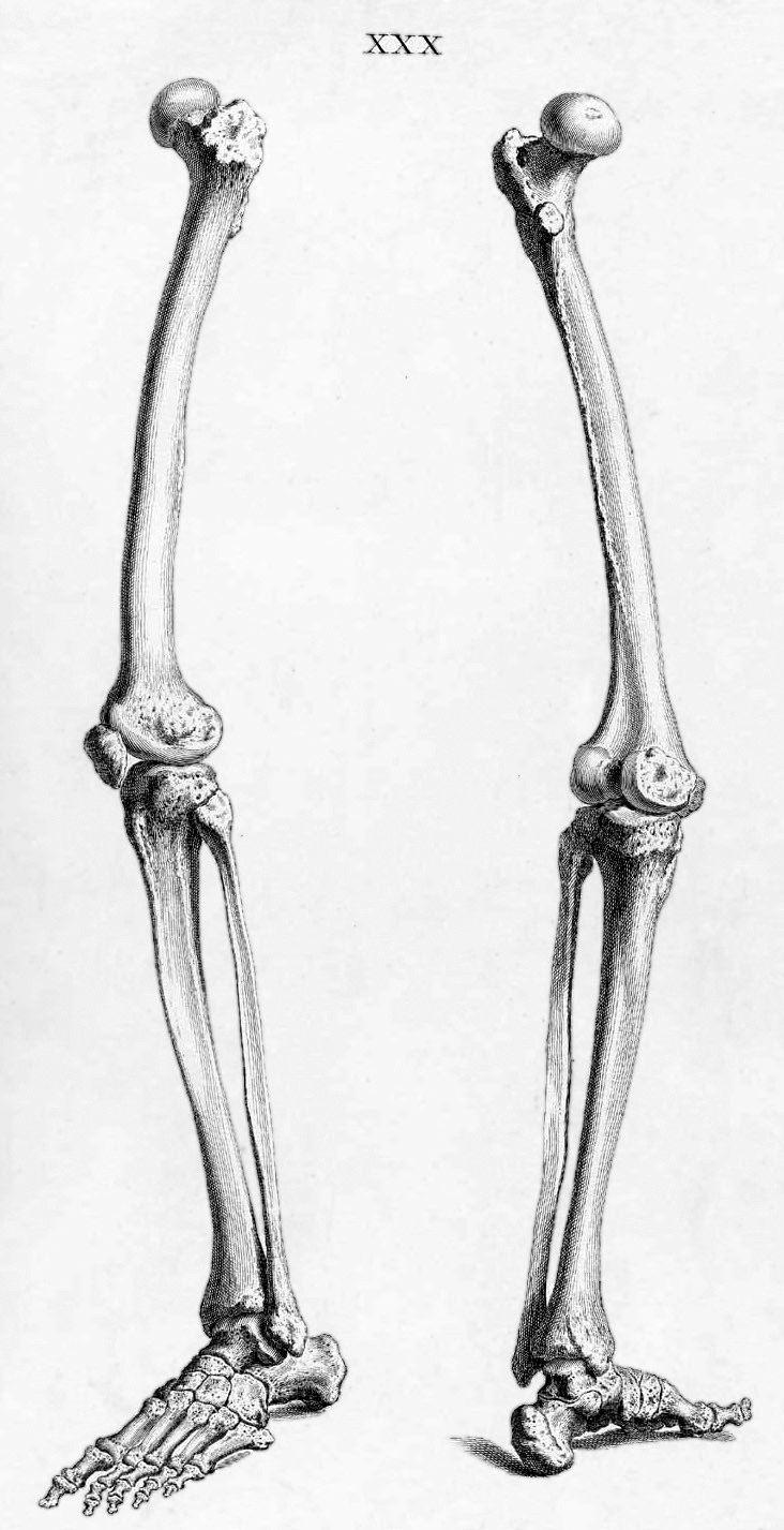 Nett Anatomie Des Menschlichen Körpers Knochen Galerie - Anatomie ...