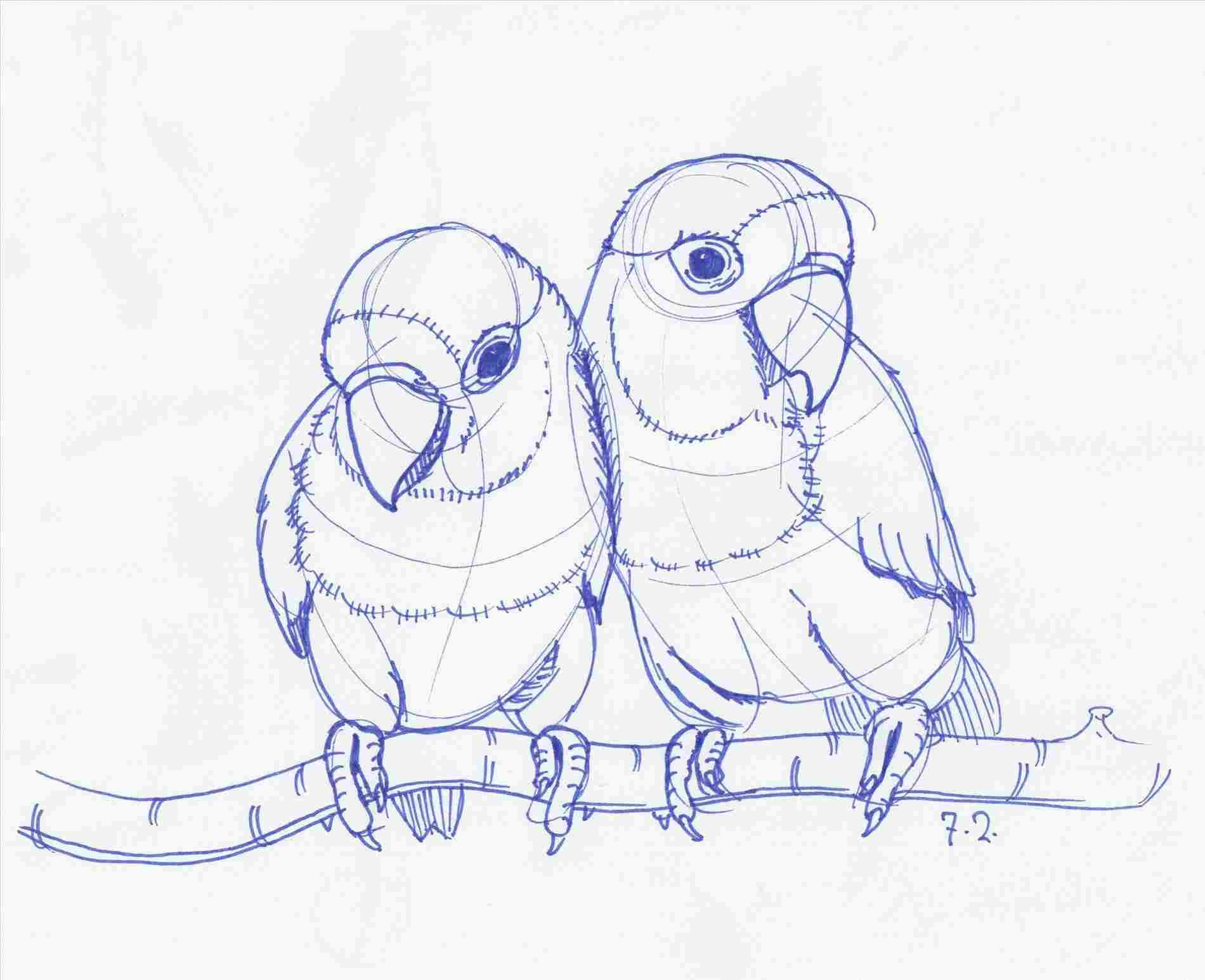 Lovebirds Pencil Drawing Love Birds Drawing With Images Bird