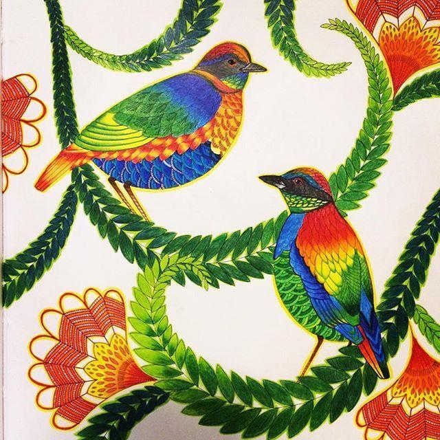 Pin by Maria Araceli Villarreal on Millie Marotta coloring