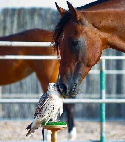 Caballo y Búho