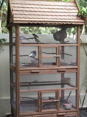 Bird Condo Pet Enclosure Cage Ideas Pinterest
