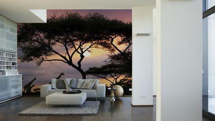 3d Fototapete Giraffen Im Sonnenaufgang Afrika Fototapete Tapeten Fotowand