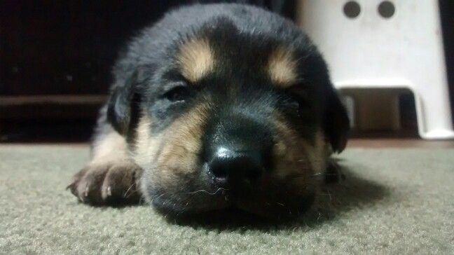 2 1/2 week old puppy;)