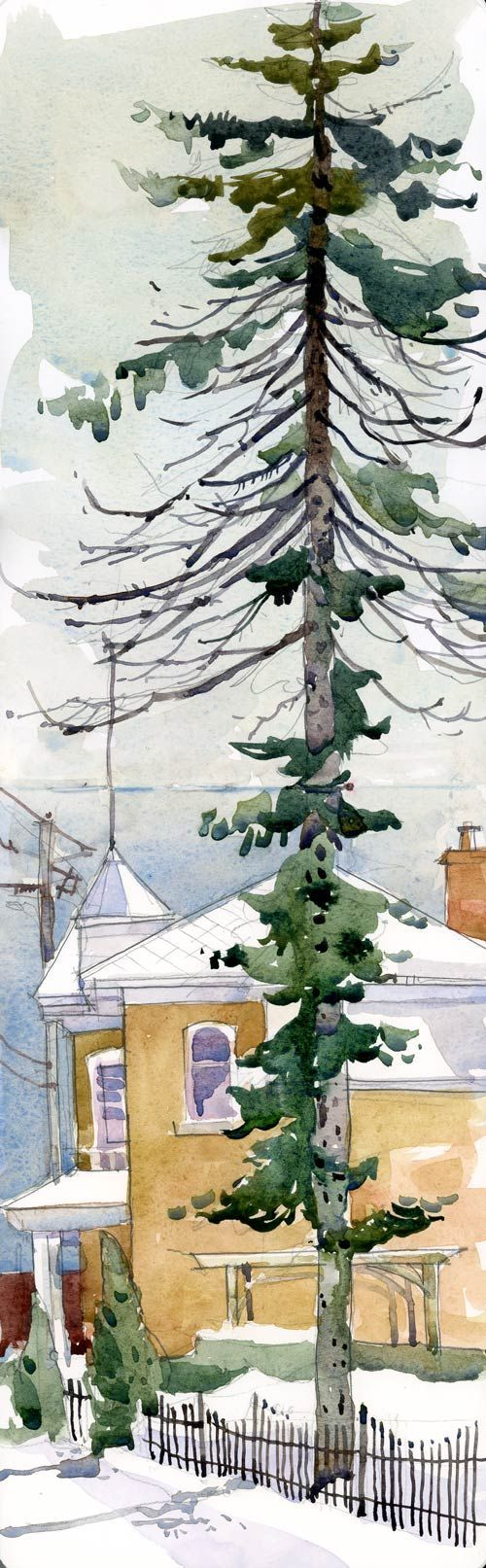 Shari Blaukopf || tall tree