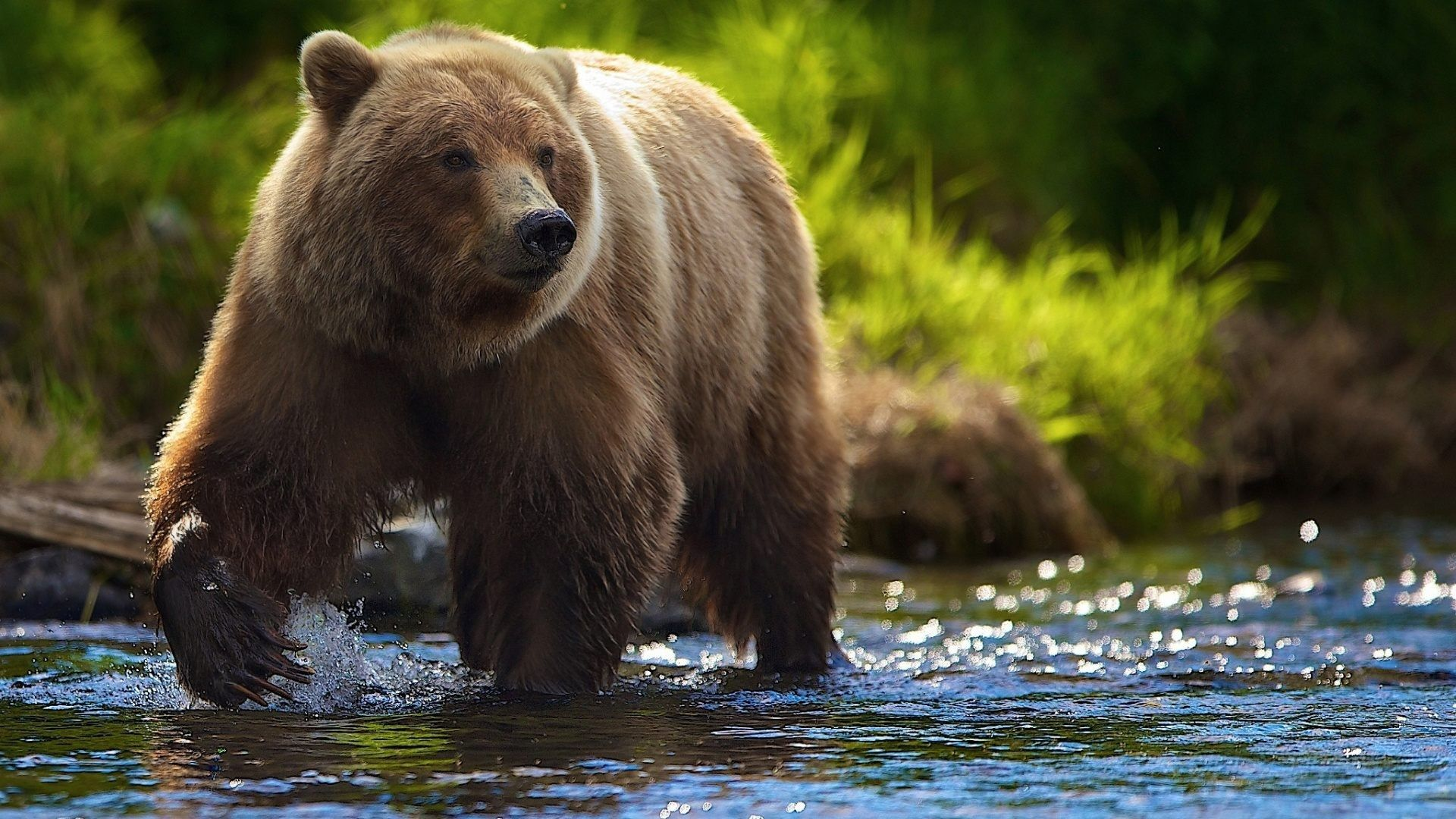 bear wallpaper mobile | animals wallpapers | pinterest | bear