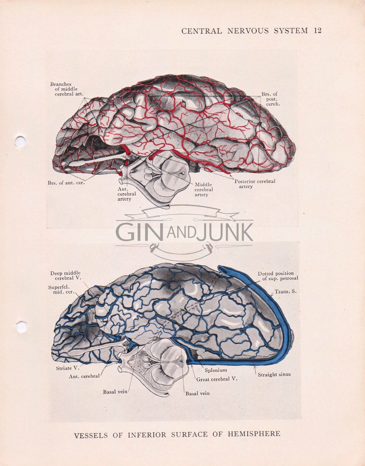 Vintage print of the human brain vessels from 1934. Anatomy Print ...