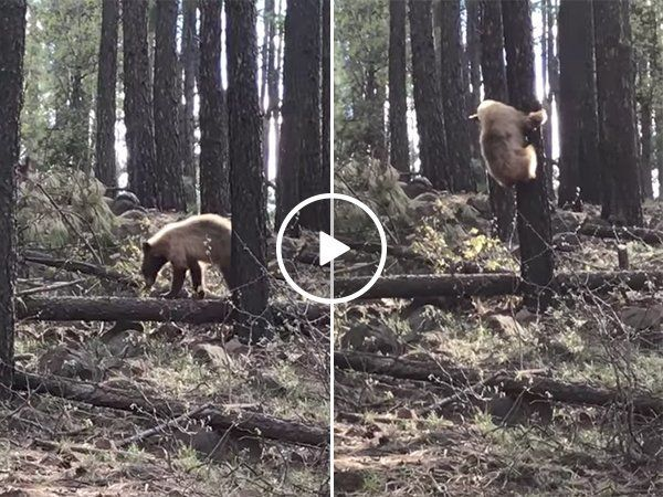 Bear attacks a baby elk, mama elk comes to the rescue (Video) http://ift.tt/2r8Nsvm  #funnypic.twitter.com/JoumtgOwHI http://ibeebz.com