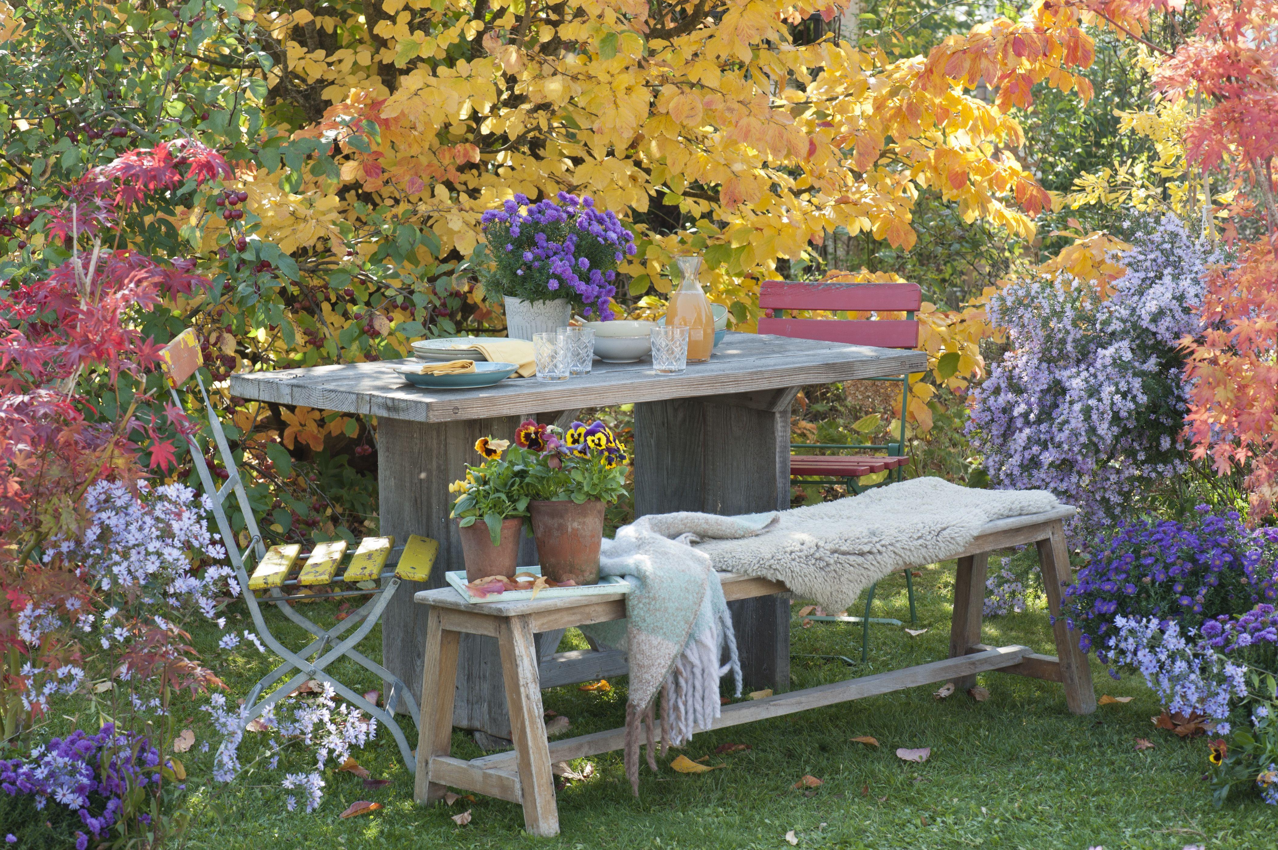 Herbstbluher Fur Den Garten Gartengestaltung Steingarten Garten
