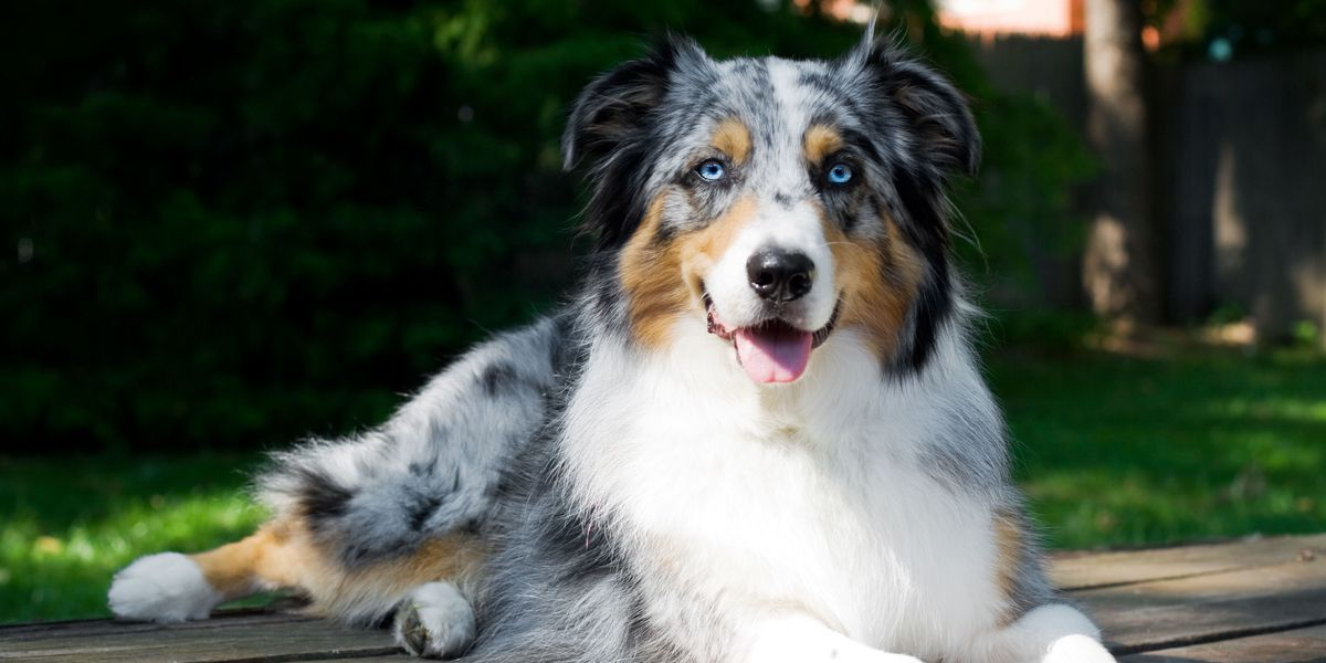 These Medium Sized Dog Breeds Are The Perfect First Pet For Any Family Dog Breeds Medium Family Dogs Breeds Dog Breeds That Dont Shed