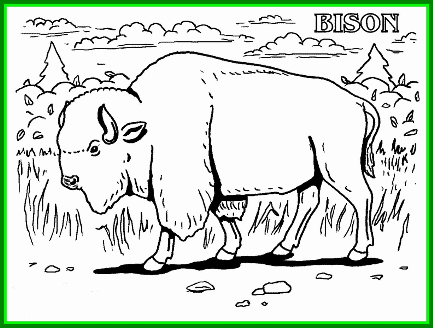 Coloring Pages Endangered Animals In