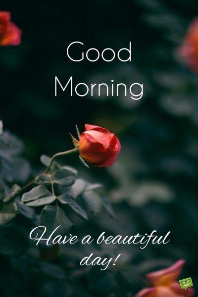 Morning Billede Fra Claire Vasquez Dagens Citater Godmorgen Citater