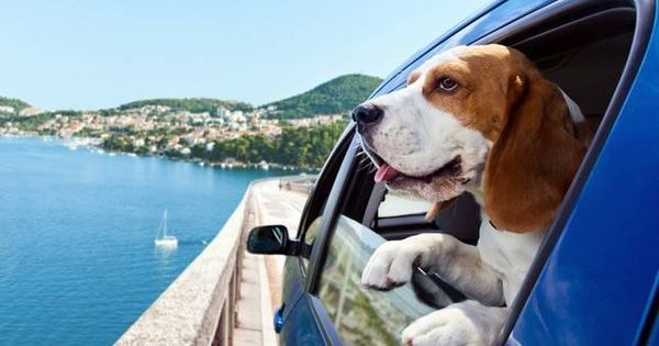 How To Take Your Dog Anywhere With The Help Of These 6 Smartphone Apps Dog Travel Dog Friendly Hotels Dog Hotel