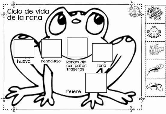 Pin De Adii Ortega En Preescolar Ciclos De Vida Proyectos De Biologia Ciclo De Vida Animales