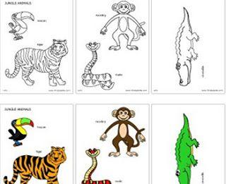 Jungle Rainforest Animals Amazon Rainforest Animals Animal