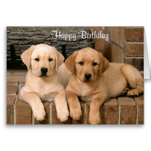 Happy Birthday Labrador Retriever Puppies Card Labrador Retrievers