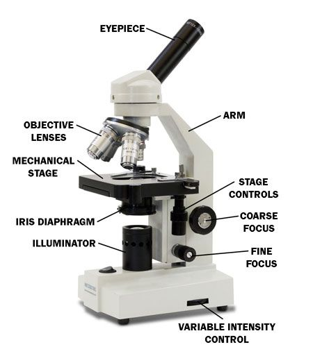 Label And Color The Parts Of Both Microscopes