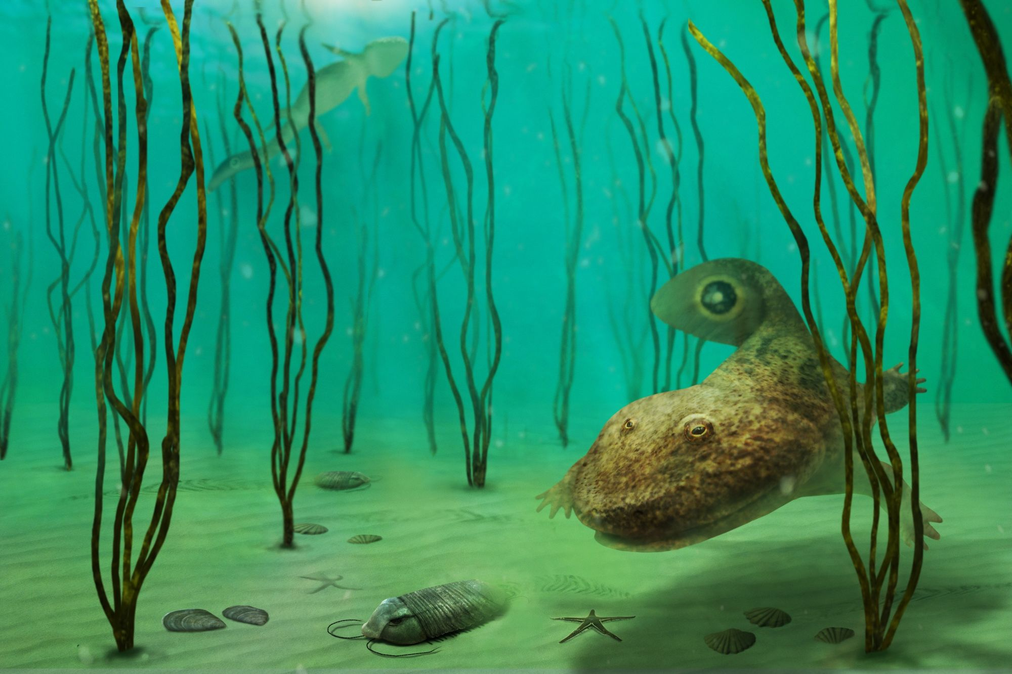 The illustration depicts the trilobite Burmeisteria notica being hunted by an amphibian tetrapod, Notopus petri some 400 million years ago by Julio Lacerda