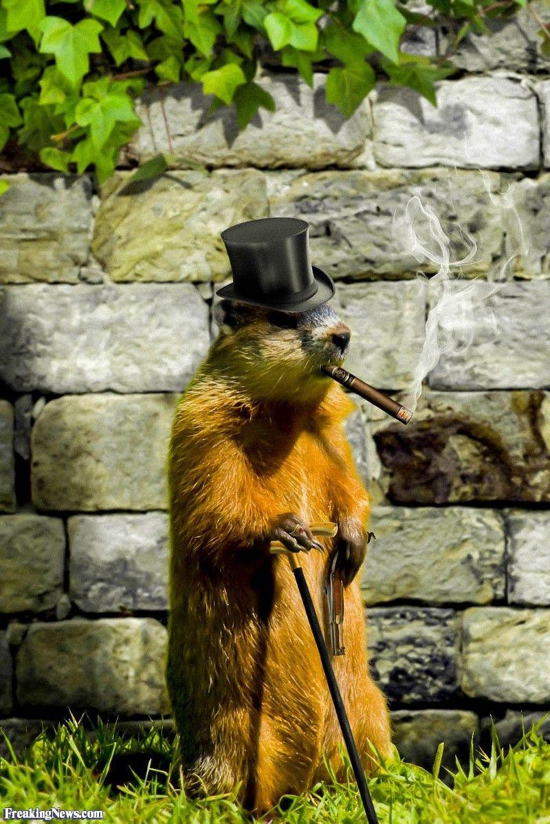 Funny Groundhog Pictures : funny, groundhog, pictures, Funny, Groundhog, Pictures, Freaking, Pictures,, Groundhog,