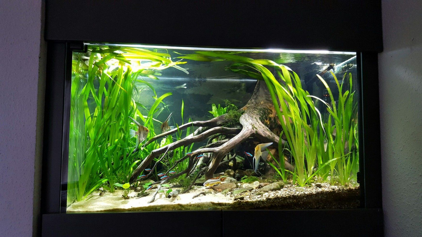 aquascaping for beginners - Google Search | Aquascape ...