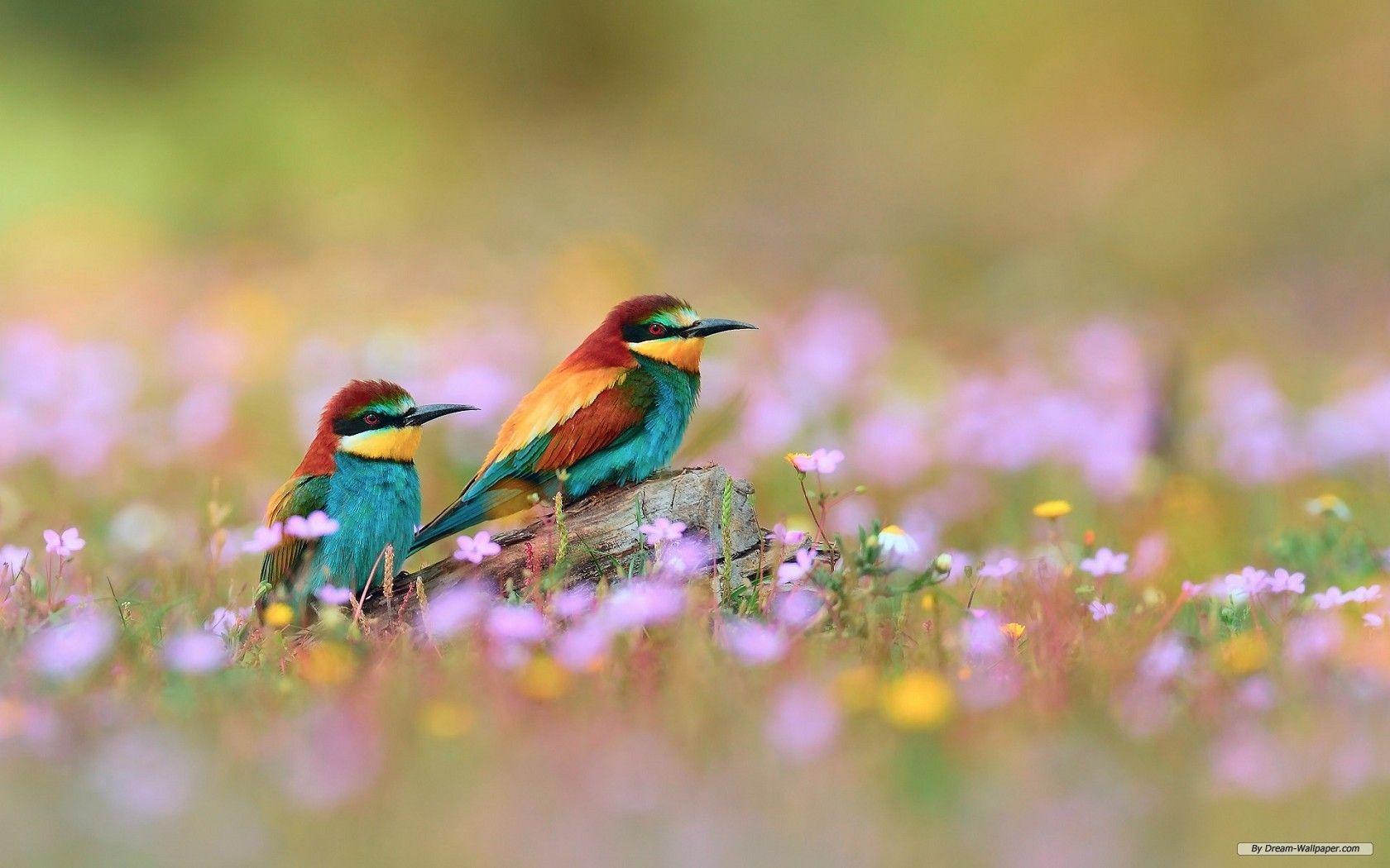 Animals springtime wallpaper