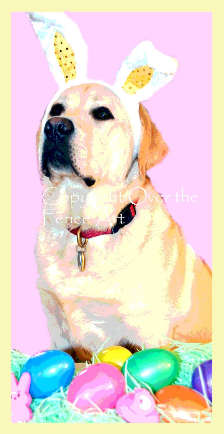 Easter card yellow labrador wears festive bunny ears by easter card yellow labrador wears festive bunny ears by overthefenceart on etsy kristyandbryce Choice Image