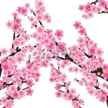 Branche cerisier japonais cerisier des fleurs de sakura arbre brunch fond de printemps - Branche de cerisier japonais ...