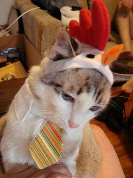Los Pollos Hermanos business cat is sad.