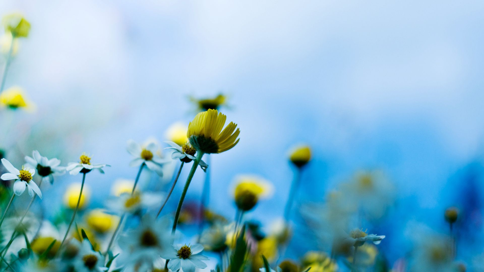 Vdohnovenie Spring Flowers Wallpaper What Are Weeds Flowers