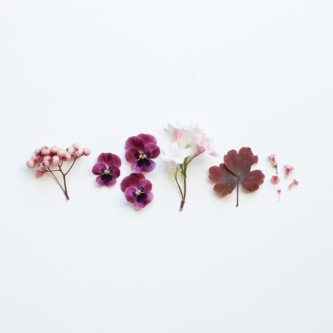 Dried Flowers Art Artsy Artists Aesthetics Ideas Inspiration