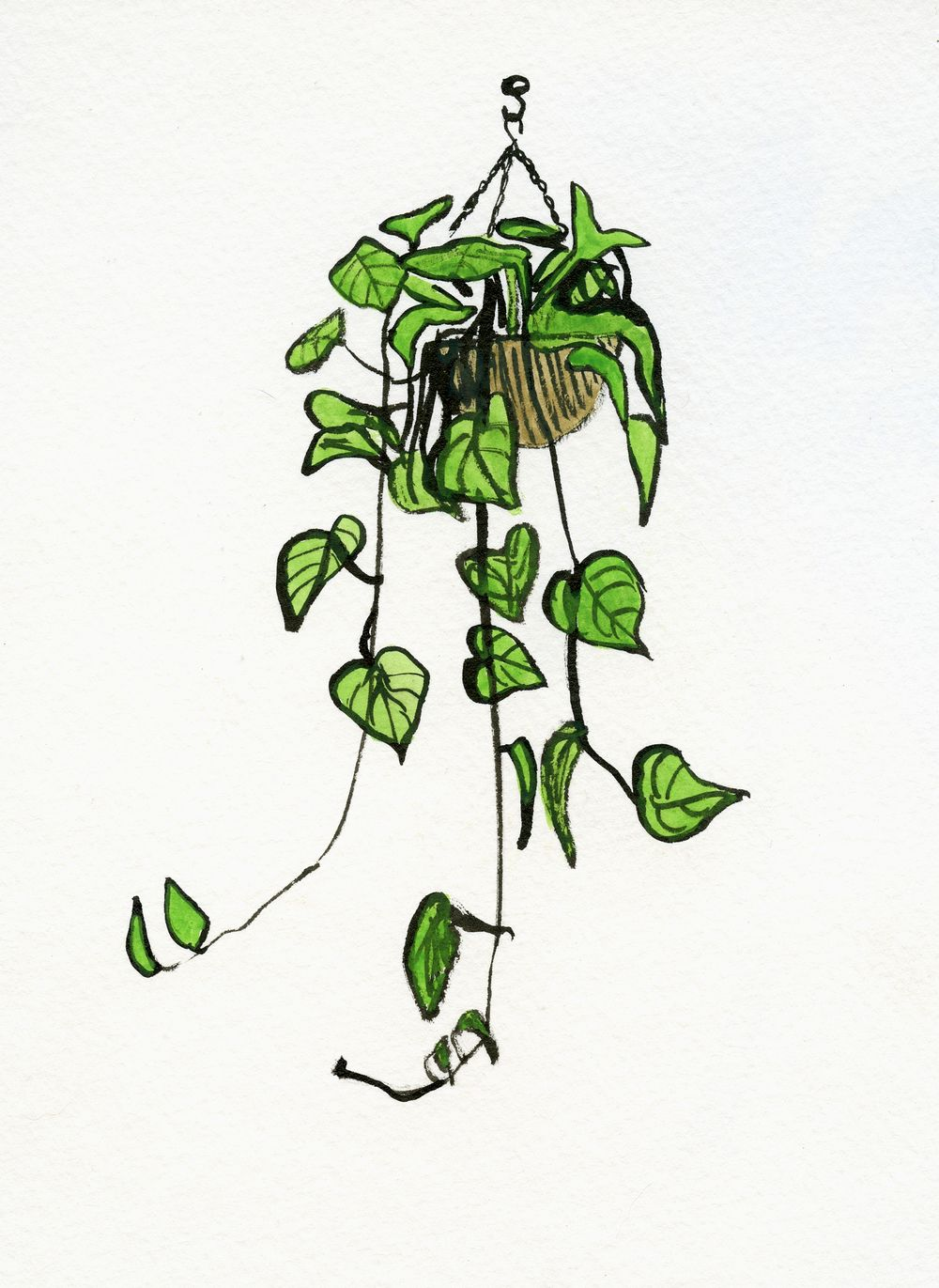Philodendron Sketch014 Jpg 1000×1371 Drawing Inspiration