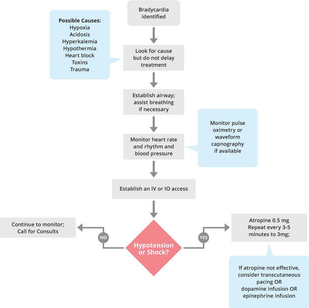 Hypertency: hypertension with bradycardia causes