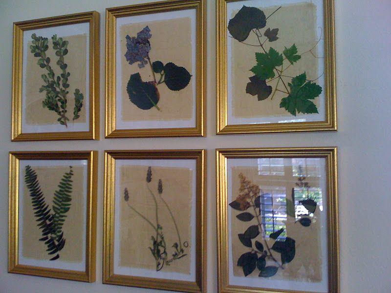 DIY framed botanicals. clip some plants (Boston fern, boxwood, grape ...