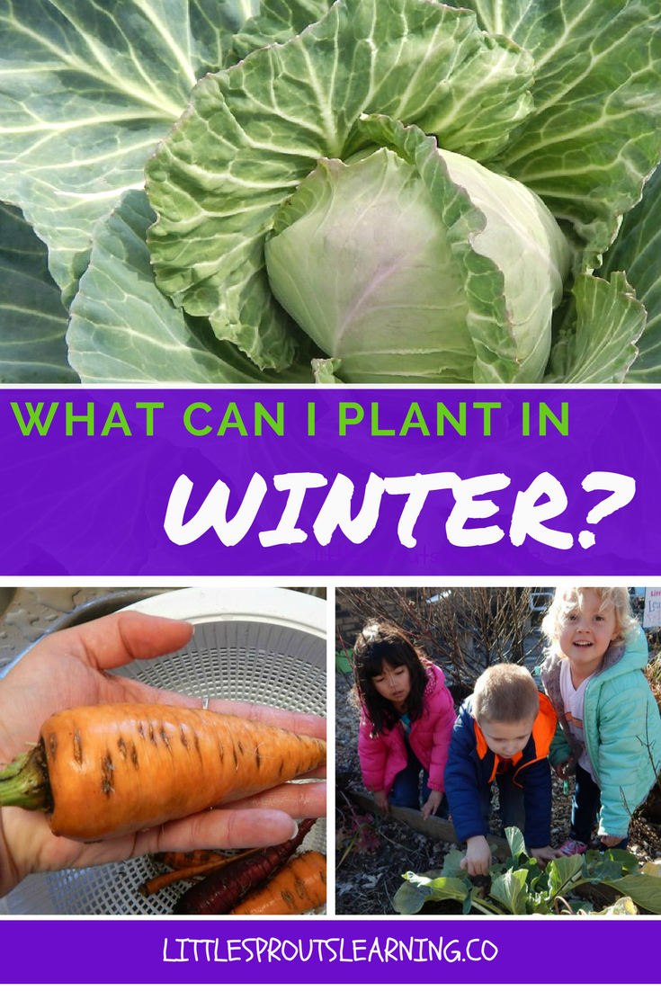 what can i plant in winter planting plants and winter