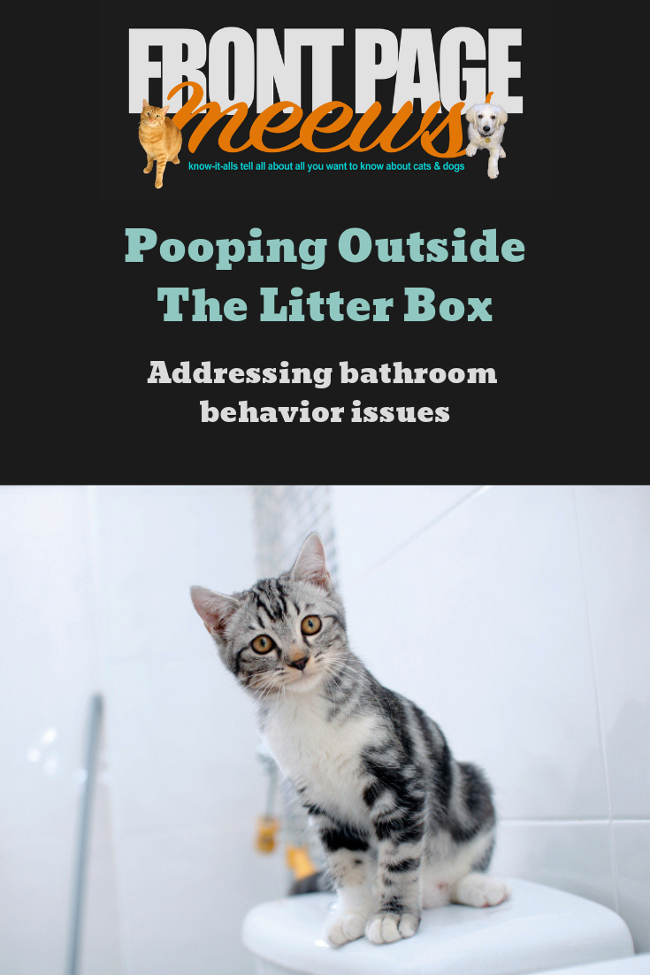 Pooping Outside The Litter Box Addressing bathroom
