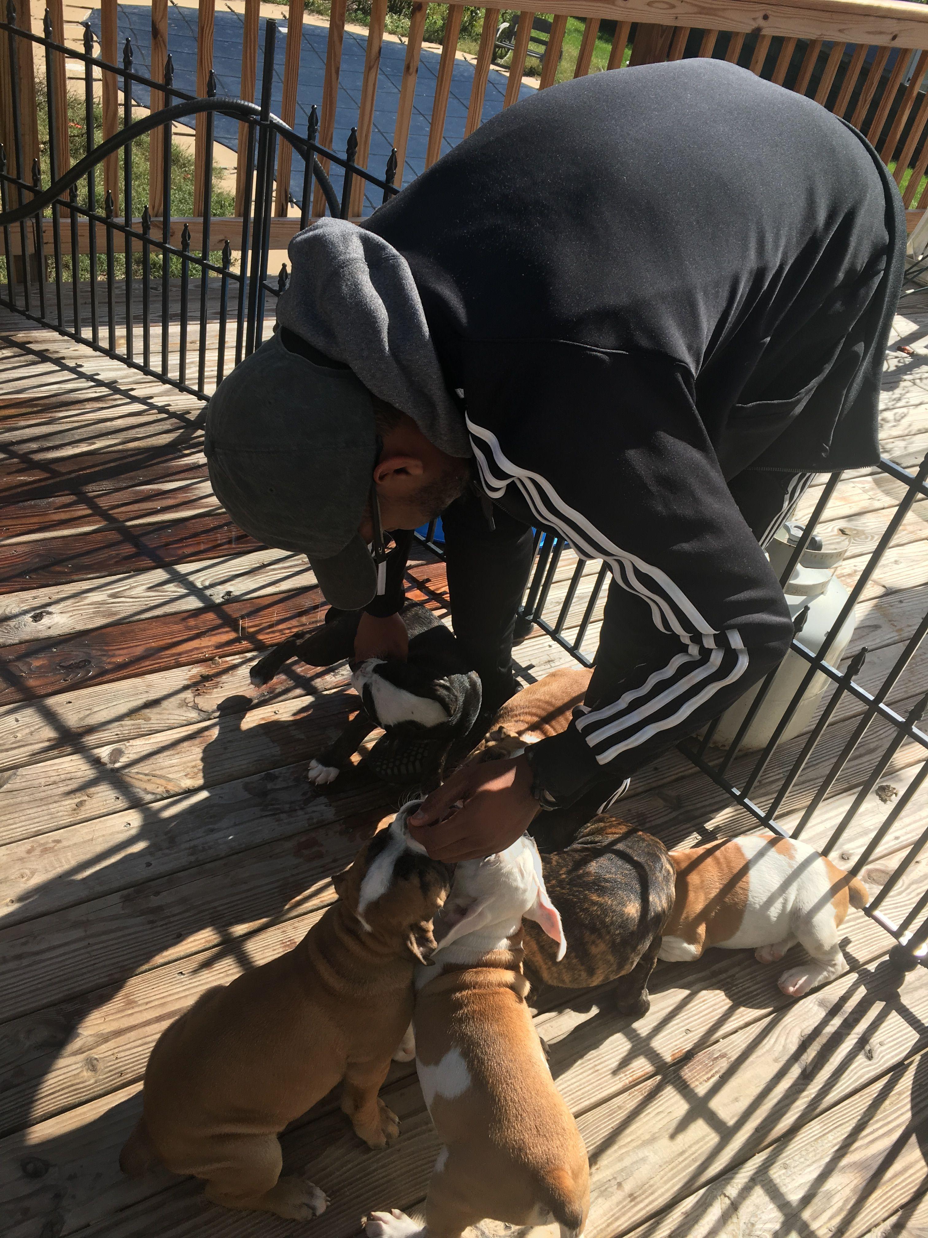 Puppies For Sale In Woodbridge Va Puppies For Sale Puppies