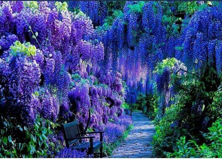 Plantwerkz Plantwerkz On Twitter Shade Plants Beautiful Gardens Dream Garden