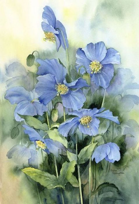 Rachel Mcnaughton 2 Flower Painting Watercolor Flowers
