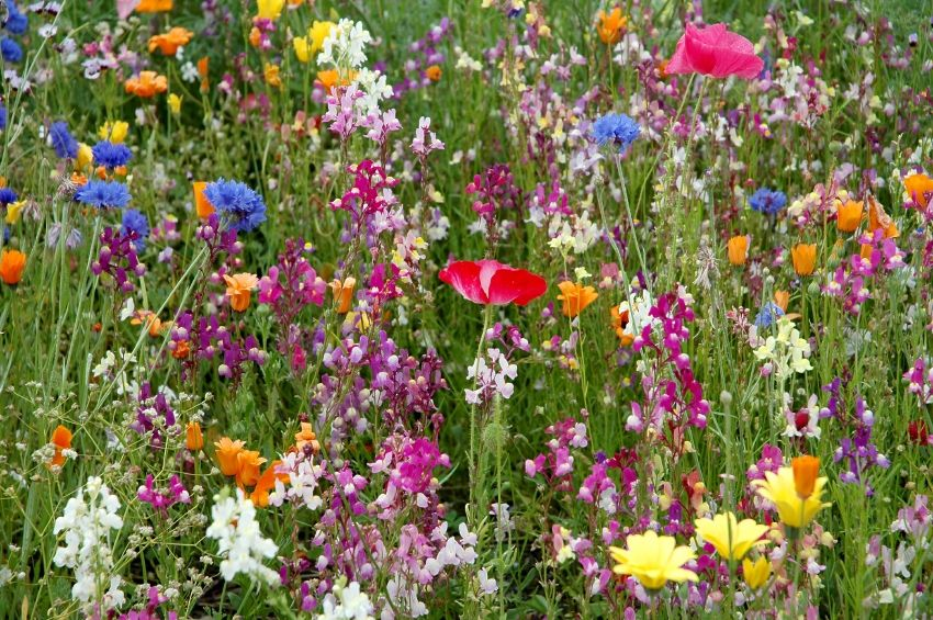 Let A Corner Of Your Garden Go Wild With Wildflowers Wild Flower Meadow Wildflower Garden Meadow Flowers
