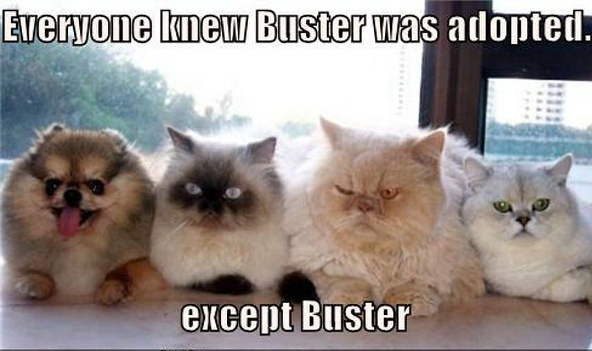 cat joke.  EVERYONE KNEW BUSTER WAS ADOPTED, EXCEPT BUSTER.