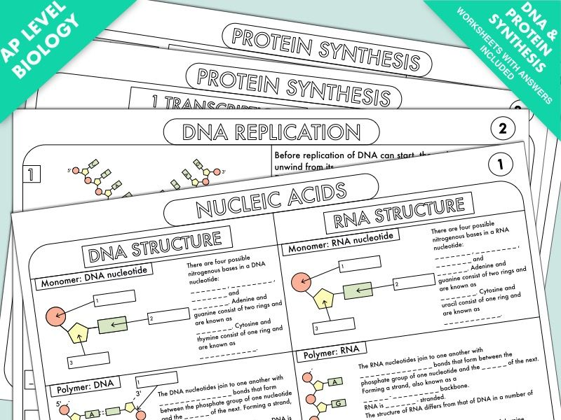 A Level Biology Worksheet Pack on DNA and Protein