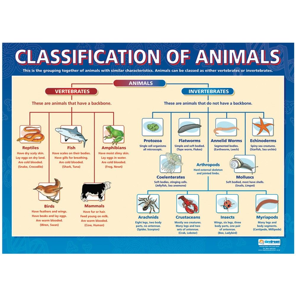 a description of a scientific classification as grouping together similar things Importance of classification in scientific investigative emphasize that by grouping things together based upon similar of scientific classification and.