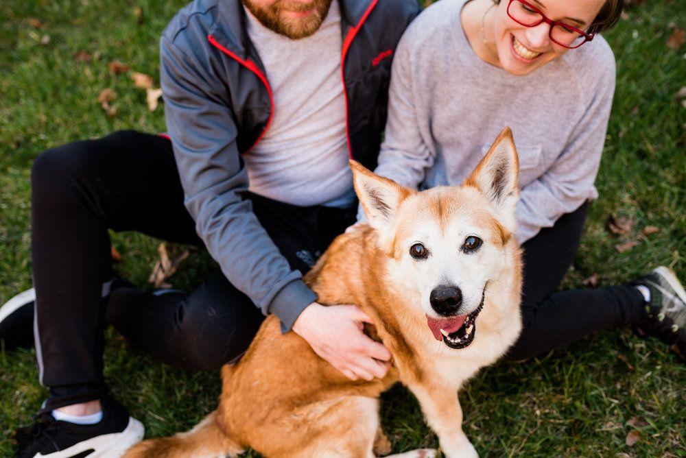 Jillian The Corgi Shiba Inu Bowling Green Ohio Pet Photography Animal Photography Pet Photographer Pets
