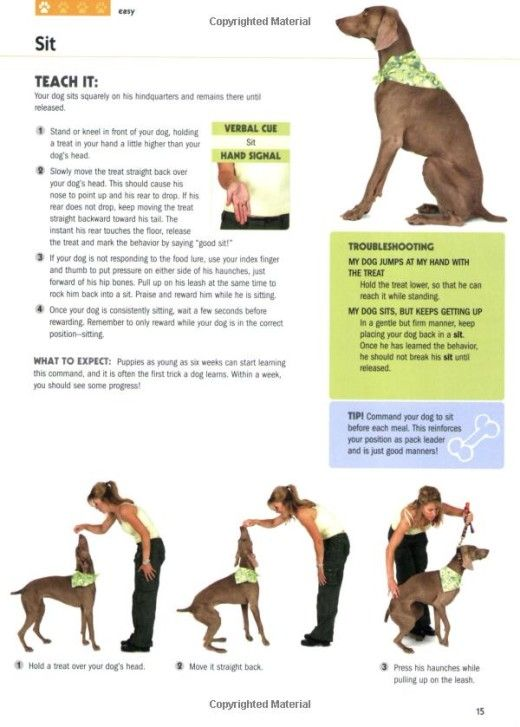 101 Dog Tricks: Step by Step Activities to Engage, Challenge, and Bond with Your Dog: Kyra Sundance, Chalcy