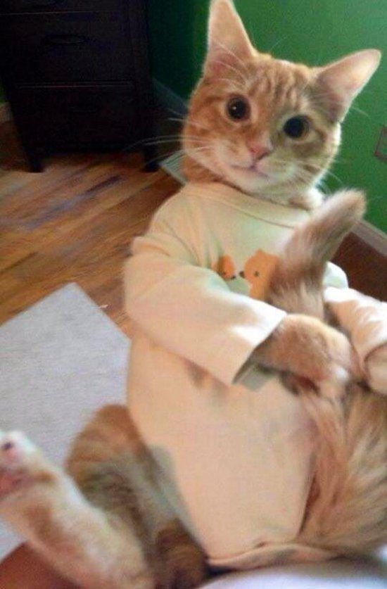 cute animals in onesies : theCHIVE