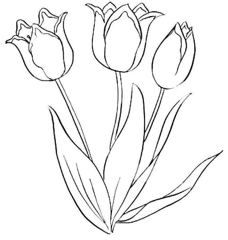 Beautiful Tulip Flower Coloring Book Flower Outline Cute Flower Drawing Flower Coloring Pages