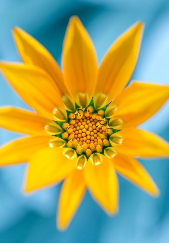 30 types of orange and yellow flowers hd images beautiful 30 types of orange and yellow flowers hd images beautiful flowers yellow flowers orange flowers and pretty flowers mightylinksfo