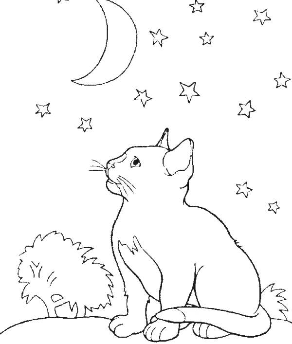 A Cat In The Middle Of The Night See Moon Coloring Pages - animal ...