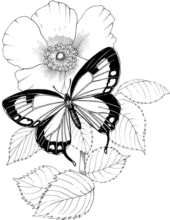 Vintage Patterned Coloring Pages Butterfly Coloring Pages 12