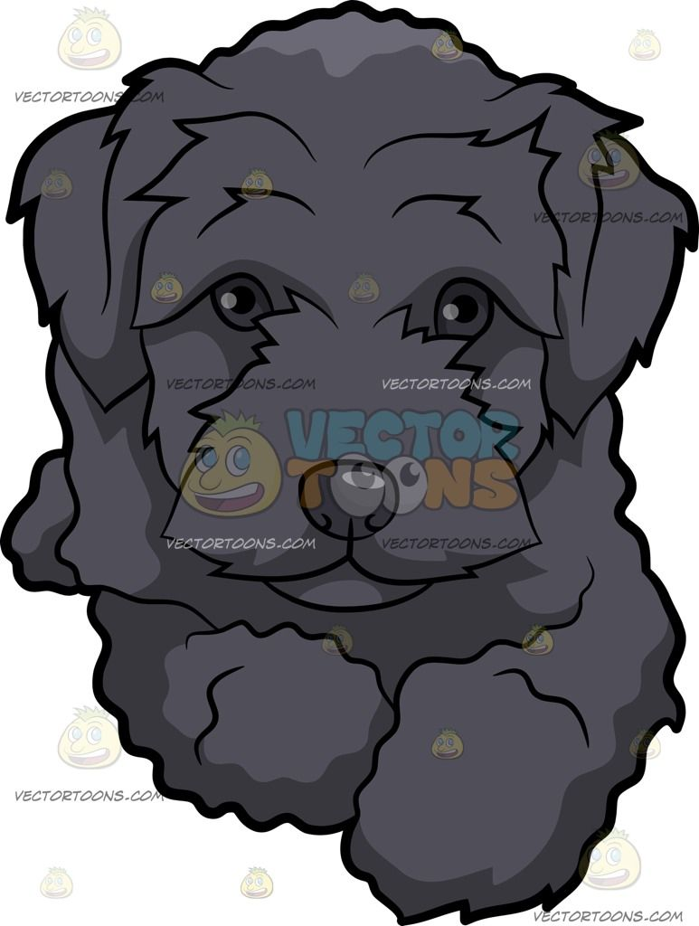 A Resting Schnoodle Dog Schnoodle Dog Schnoodle Cartoon Dog