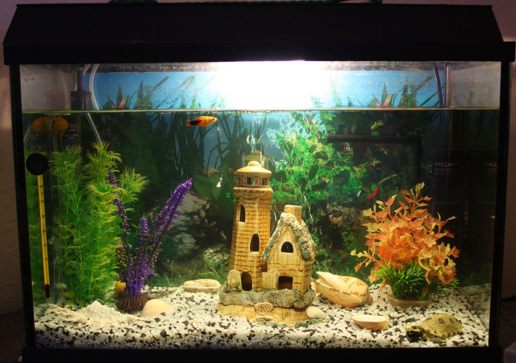 Akvarium 20 Tys Izobrazhenij Najdeno V Yandeks Kartinkah Akvarium Kartinki